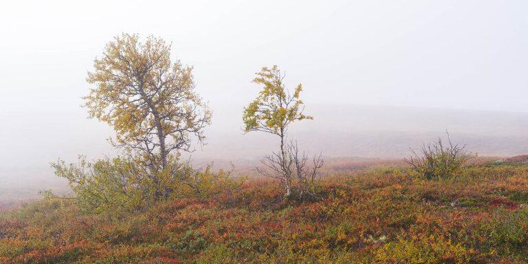Seasons of Åre - Niclas Vestefjell - Fotograf Åre